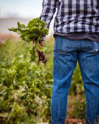 мъж с дънки и карирана риза държи откъснат зеленчук