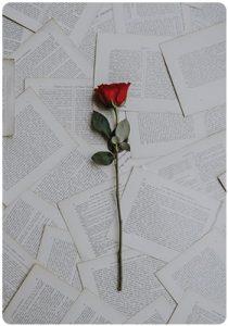 Chervena roza vurhu metafori za liubovta
