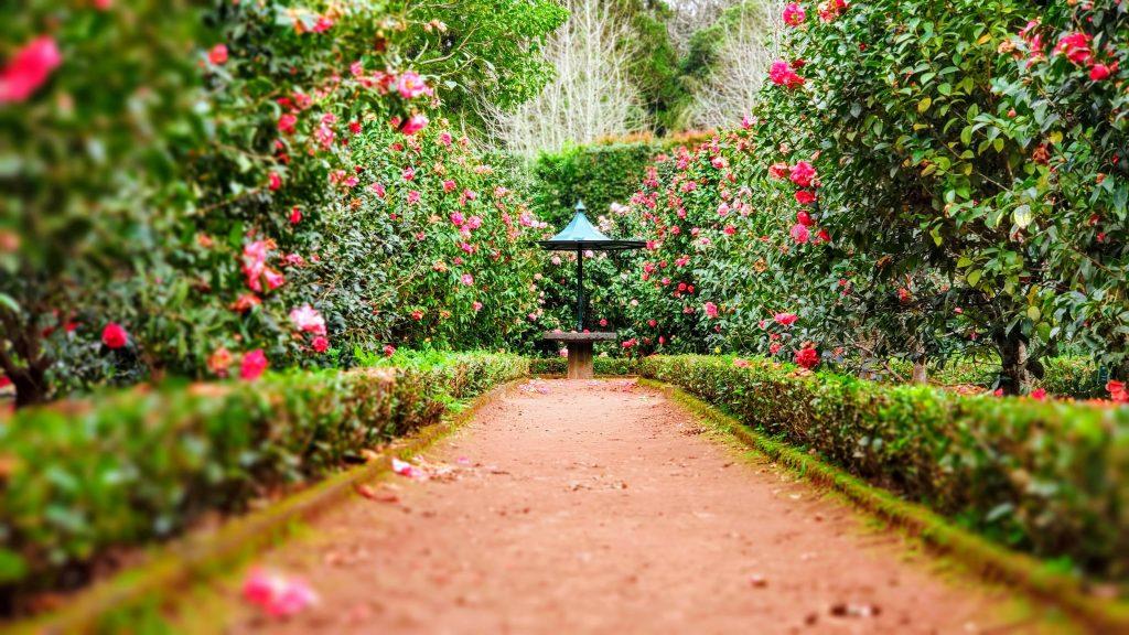 алея обградена с цветя