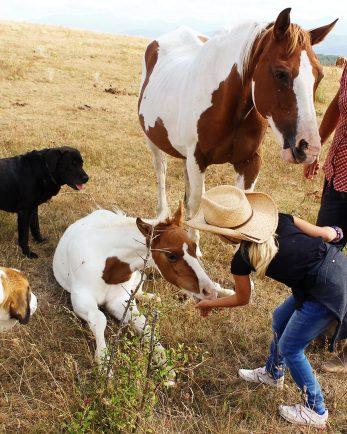конна езда за начинаещи ел пасо