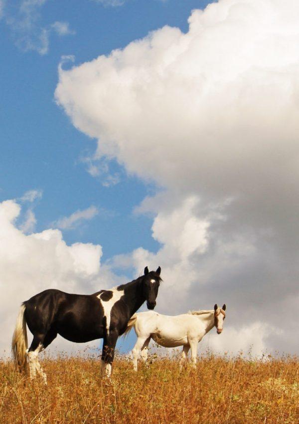 конна езда за напреднали
