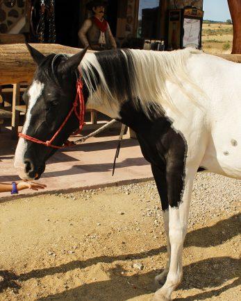 езда за деца в ранчо Ел Пасо