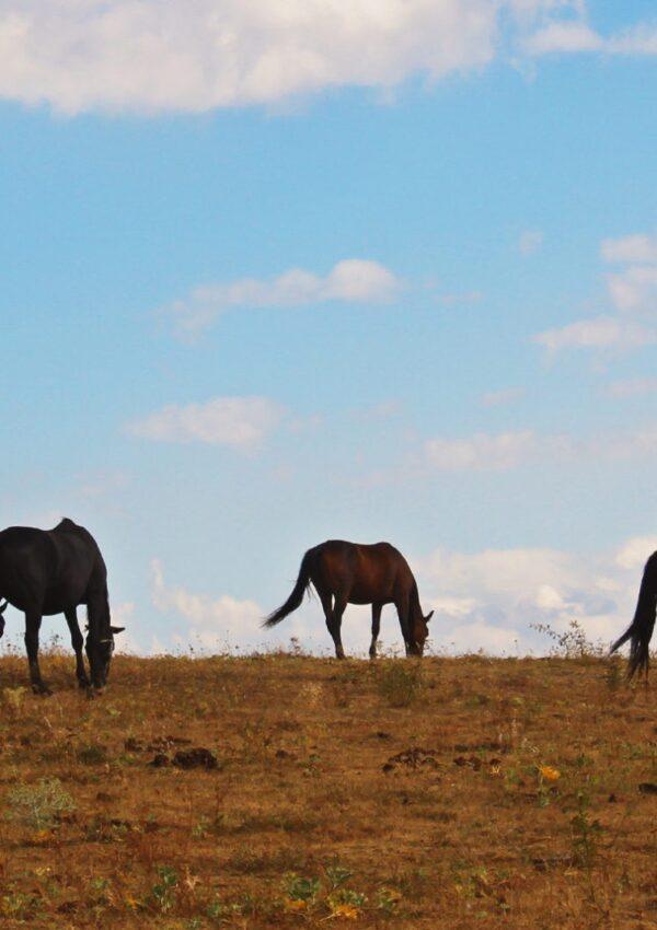 ранчо ел пасо езда